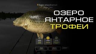 Русская рыбалка 4 ТРОФЕЙНЫЕ КАРПЫ ОЗЕРО ЯНТАРНОЕ Russian fishing 4 TROPHY CARP AMBER LAKE
