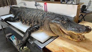 Breaking Down Alligator That Lived for 20 Years