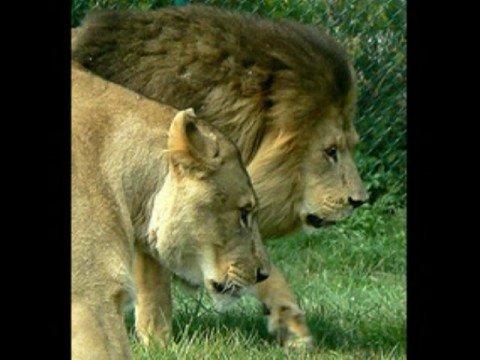 lion king – Circle of life swahili lyrics