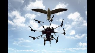 Watch Animal Vs Drones Fight (Compilation)