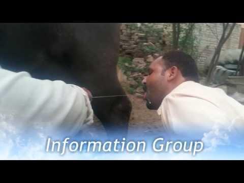 Sada Katta chori ho gya...very funny video