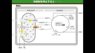光合成のしくみ(ゆうきのバイオロジー) 音声改訂