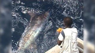 Ngeri! Video Mancing Ikan Black Marlin Monster Berat 300 kg