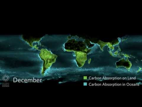 Timelapse: Photosynthesis Seen from Space | California Academy of Sciences