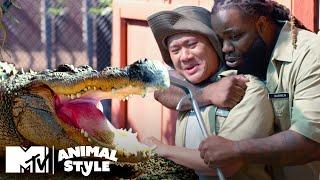 Hedgehog Pedicures, A Chinchilla Dust Bath, & A Grumpy Gator | Animal Style