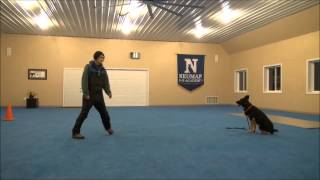 Mausi (german Shepherd) Boot Camp Dog Training