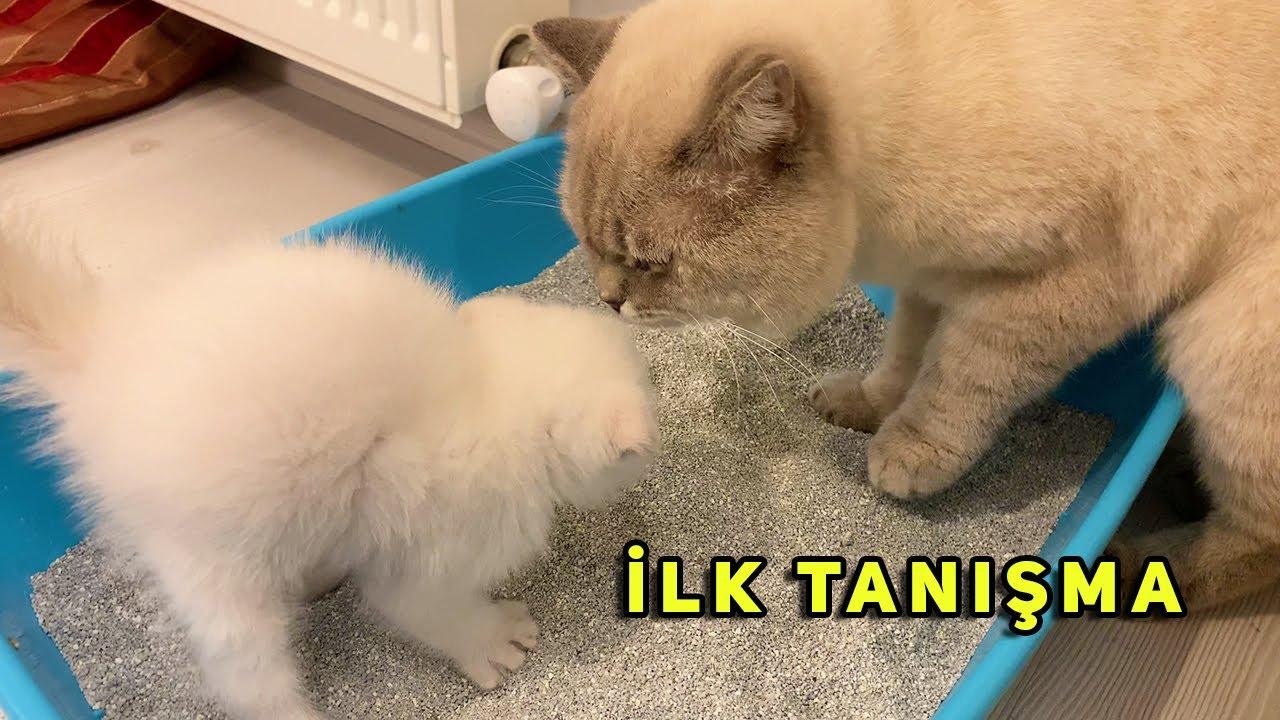 Yavru Kedileri Babalarıyla Tanıştırıyorum || PATİ ATTI :(