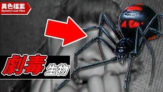 【藍環章魚】「藍環章魚」#藍環章魚,世紀最毒物種!10...