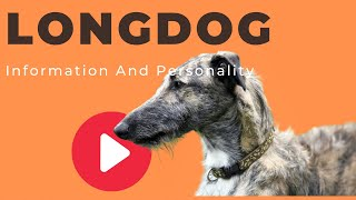 All Dogs Breeds - Longdog Breed Information And Personality