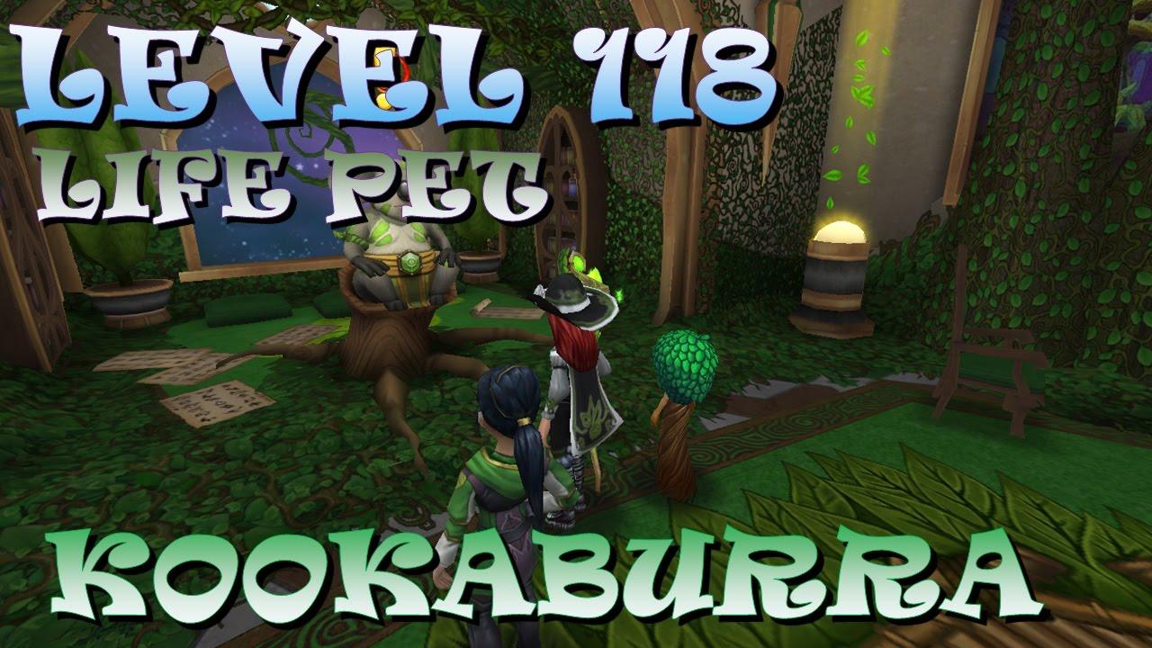 Wizard101-Level 118 LIFE Pet Quest! (Kookaburra)