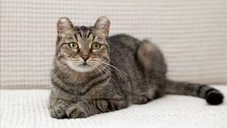 Кошка ищет дом. Двухлетняя кошка Ксюша ищет дом и любящего хозяина