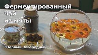 Ферментированный чай из мяты в домашних условиях