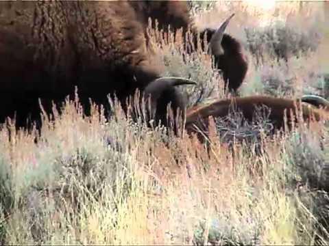 Bison Hunt Orientation