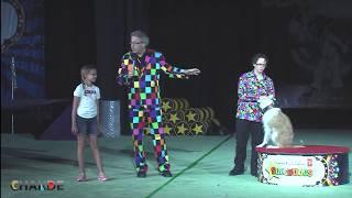 Super Dog Show Calgary Stampede 2014