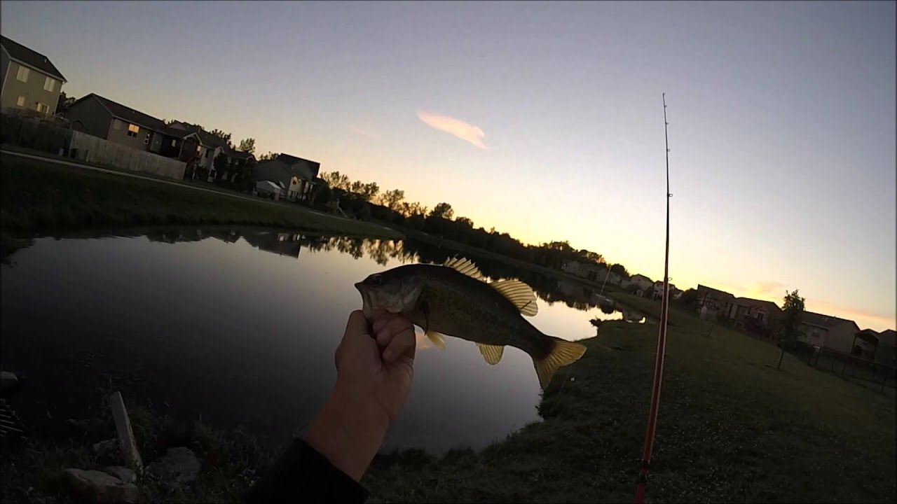 Bass Fishing Ponds Youtube