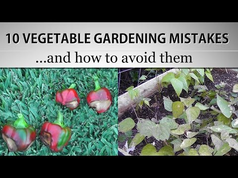[ Watch This ] 10 Vegetable Gardening Mistakes and How to avoid them - Gardening Tips & Suggestions!