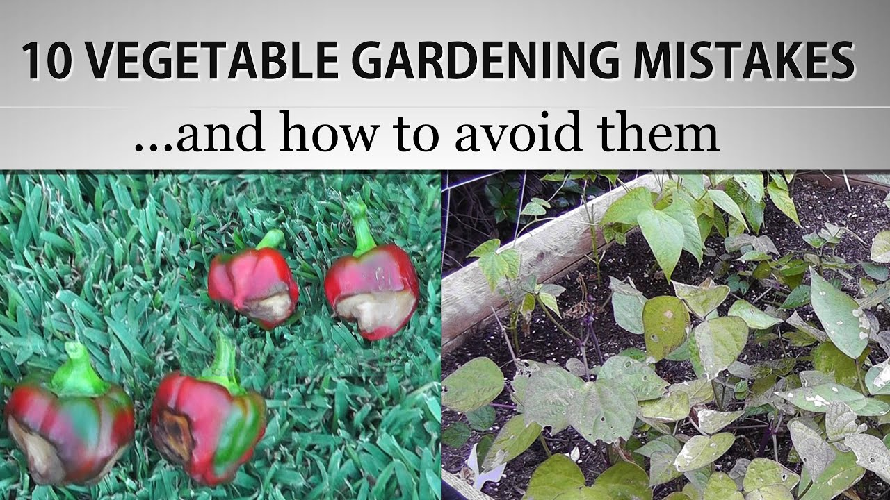 Picturesque  Vegetable Gardening Mistakes And How To Avoid Them  In K  With Outstanding  Vegetable Gardening Mistakes And How To Avoid Them  In K With Astonishing Graphic Centre Covent Garden Also Rock Garden Bed Ideas In Addition Madison Square Garden Penn Station And Garden Art Images As Well As Wooden Garden Tables Bq Additionally Cheap Rattan Garden Furniture Uk From Youtubecom With   Outstanding  Vegetable Gardening Mistakes And How To Avoid Them  In K  With Astonishing  Vegetable Gardening Mistakes And How To Avoid Them  In K And Picturesque Graphic Centre Covent Garden Also Rock Garden Bed Ideas In Addition Madison Square Garden Penn Station From Youtubecom