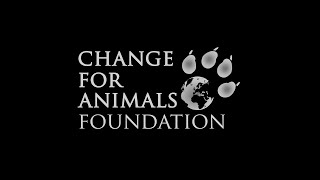 Change For Animals Foundation - Lola Webber