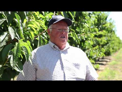 Dean Devine, California Cherry Farmer
