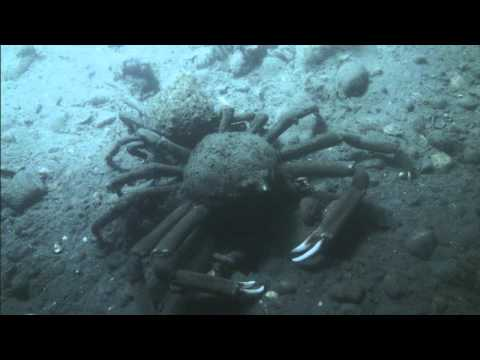 ROV Exploration of Long Island Sound 2013