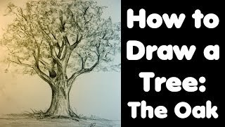 How to draw a Tree: The Oak