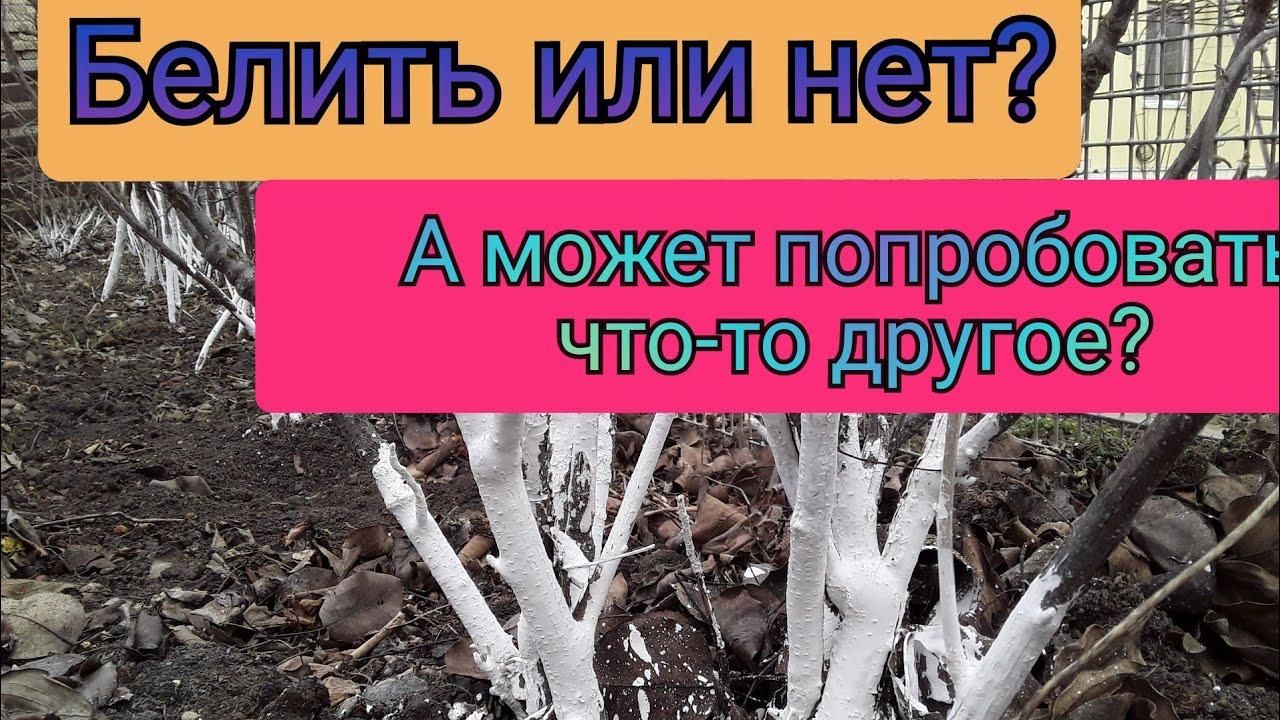 Весенняя обработка Деревьев, Кустарников, Винограда. Побелка и что еще Помогает от Вредителей