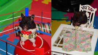 ПРИКОЛЫ С Хомячками Джунгариками. (СМЕШНАЯ ОЗВУЧКА) Hamsters like #319