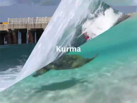 Surfing India - 2012
