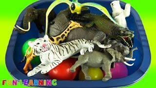 Learn The Names of Wild Zoo Animals For Kids and Colors with Box of Toys