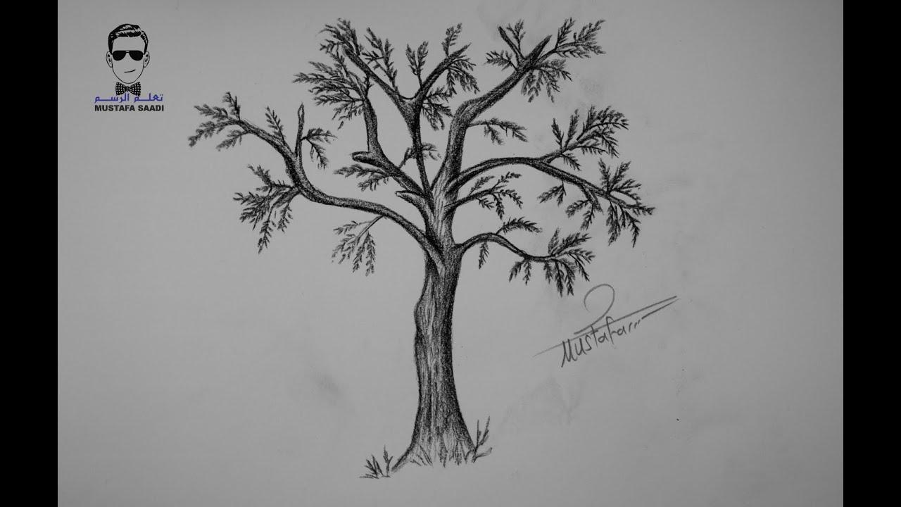 تعلم رسم شجرة بالرصاص خطوة بخطوة للمبتدئين Youtube