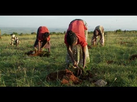 Ethiopia: Humbo Forest Reclamation Project