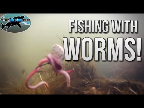How To Catch Fish With Worms | TAFishing