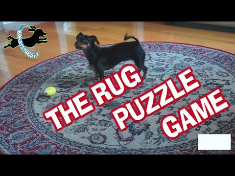 RIpley Solves Her Rug Puzzle | A DIY, Free, and Homemade Smart Dog Game