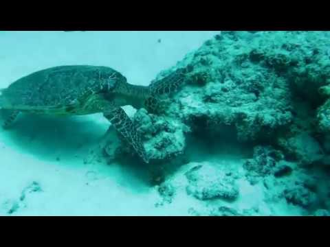 diving @ Anse Lascar, Silhouette Island, Seychelles