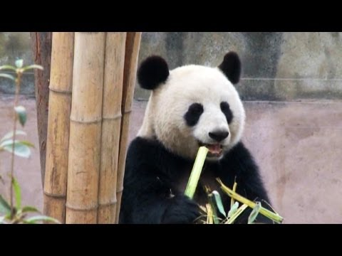 The FedEx Panda Express: Chengdu to Toronto
