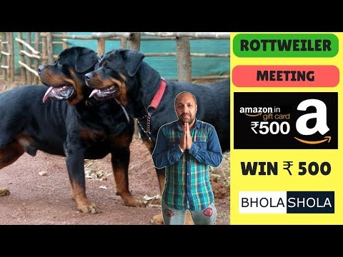 Pet Care – Rottweiler Mating – Bhola Shola