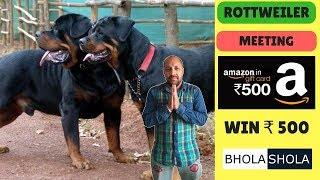 Pet Care - Rottweiler Meeting - Bhola Shola