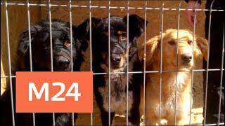 В Чехове обнаружили концлагерь для собак - Москва 24