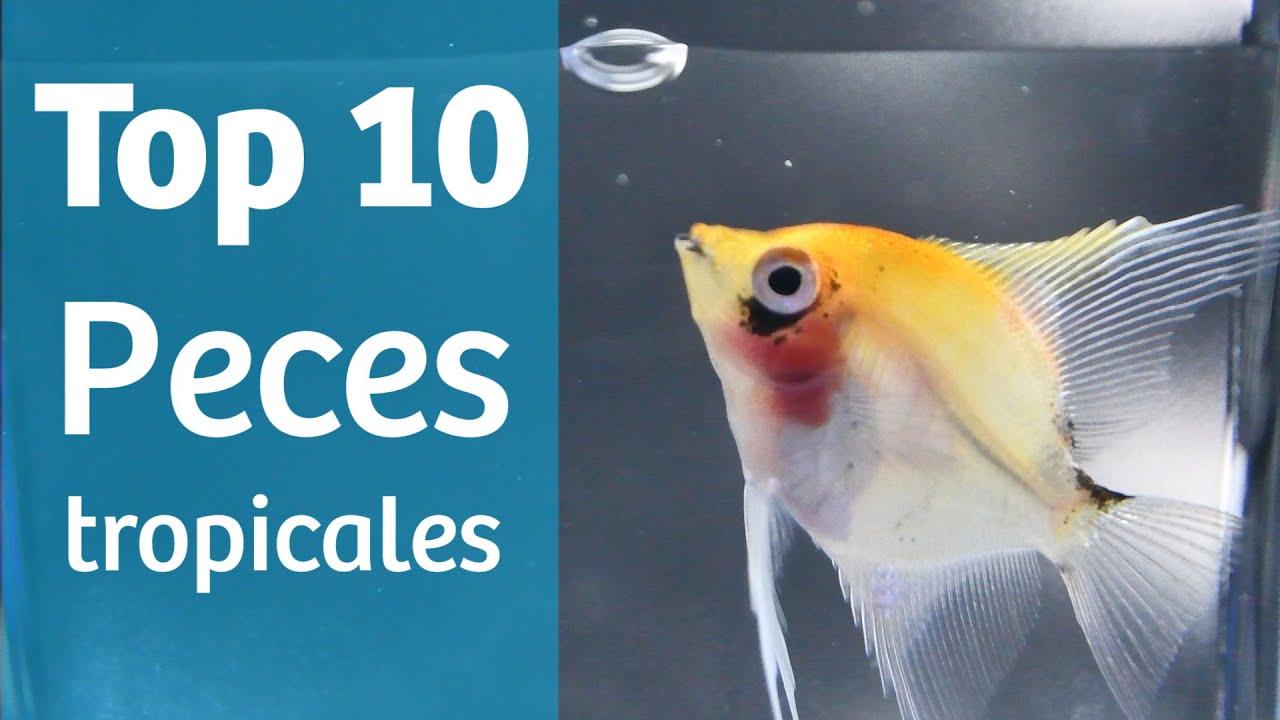 Top 10 Tropicales Peces Para Tu Acuario Tropical Youtube