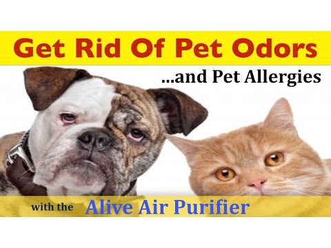 Pet Odor Air Purifier