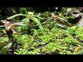 Ep. 43 BEAST GROUND COVER AND VIVARIUM PLANT SHOPPING