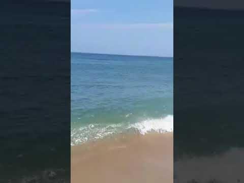 White Shark Causes Commotion Off  Shore of Nauset Beach, Massachusetts