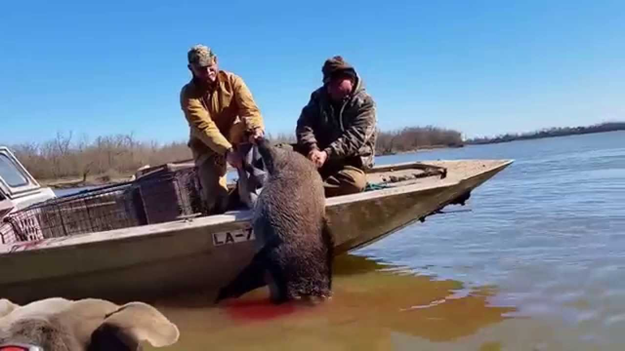 Hog hunting in louisiana youtube for How much is a fishing license in louisiana