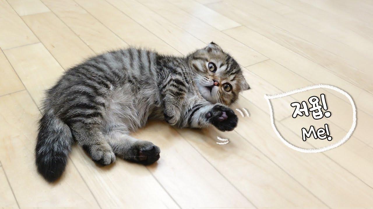 아이스크림 먹고 싶은 고양이 손들어~