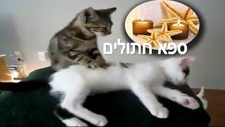 מסאז חתולים חדש