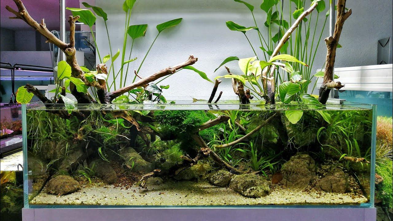 Shallow Tank Paludarium Ecoarium Youtube