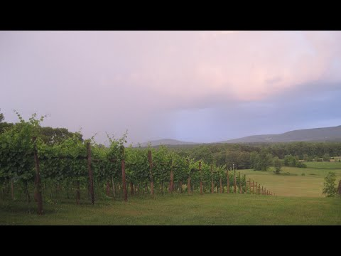 Orange County, Virginia's Vineyards
