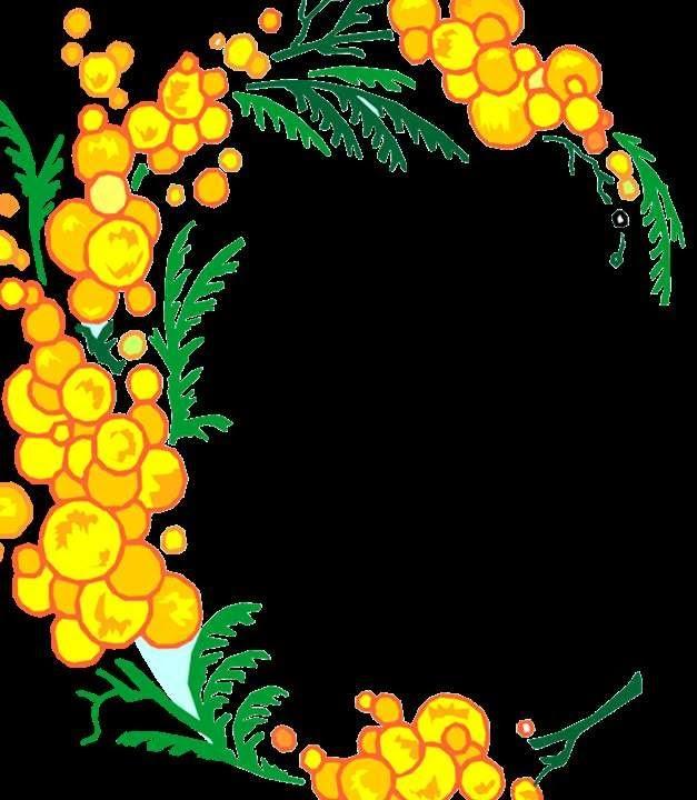 мимоза цветы фото