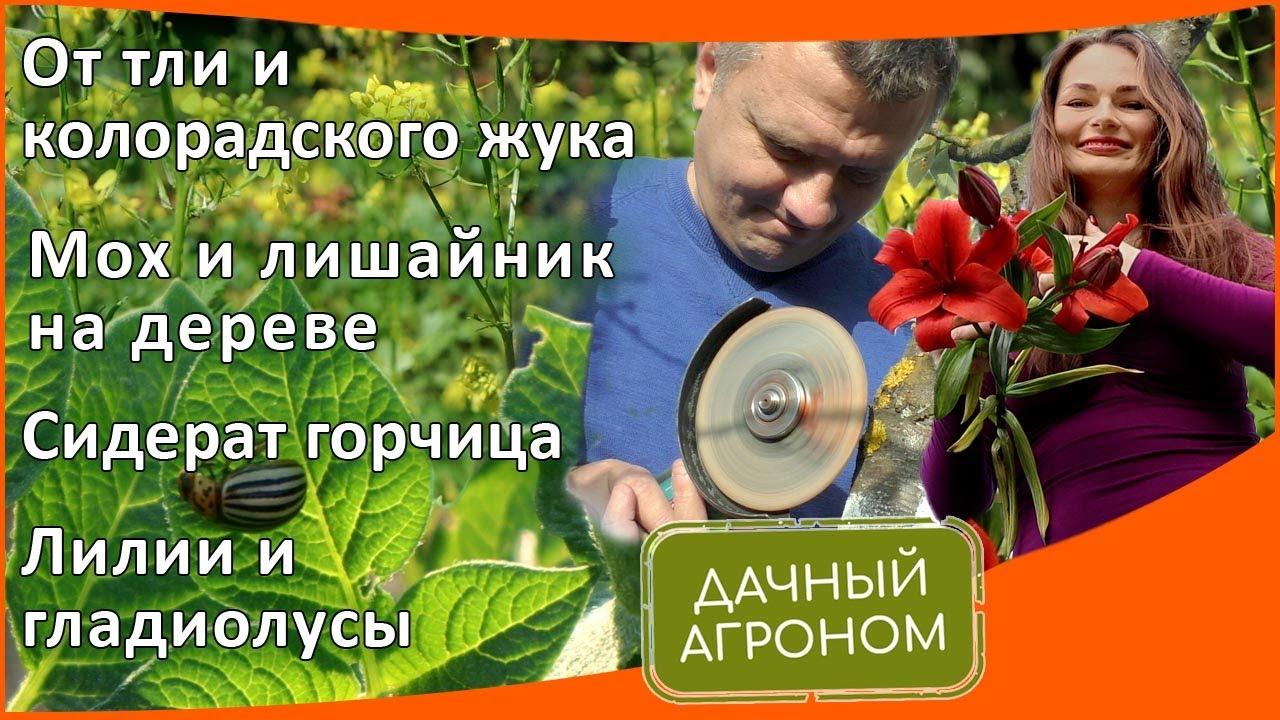 От тли и колорадского жука / Мох и лишайник на дереве / Сидерат горчица / Лилии и гладиолусы