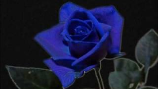 Play Rosa Blu